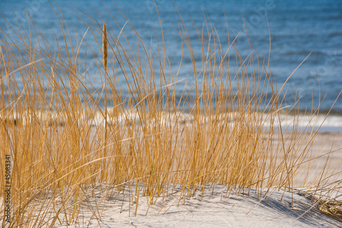 Sea shore with reeds - 45083341