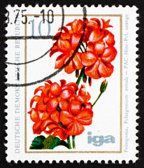 Postage stamp GDR 1975 Pelargonium, Flowering Plant