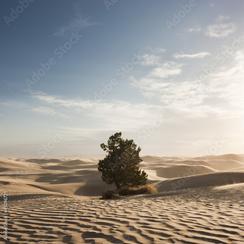 """USA, Utah, Little Sahara, tree on desert"""