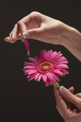 Young woman's hand plucking petal from flower