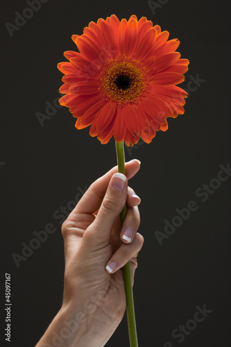 Young woman's hand holding flower