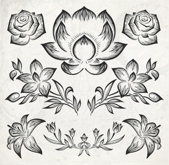 floral design elements. vector illustration