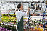 USA, Utah, Salem, man switching on sprinklers in greenhouse