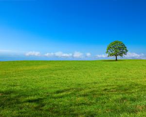 Paysage de campagne panoramique A