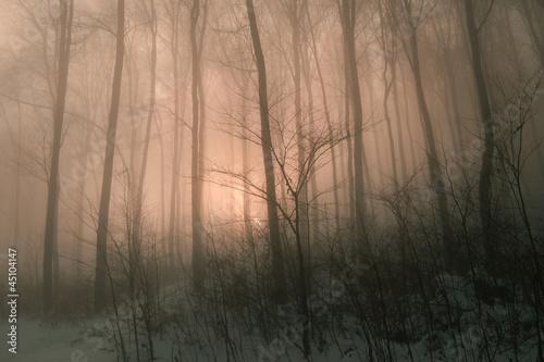 Fototapeten,wald,nebel,magical,holz