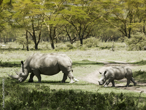 """Rhinoceros family in Kenya, Africa"""
