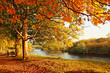 canvas print picture - Beautiful Autumn in the park