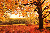 Fototapete Baum - Orange - Wald