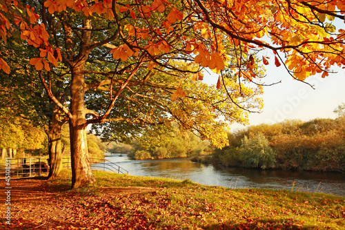 canvas print picture Beautiful Autumn in the park