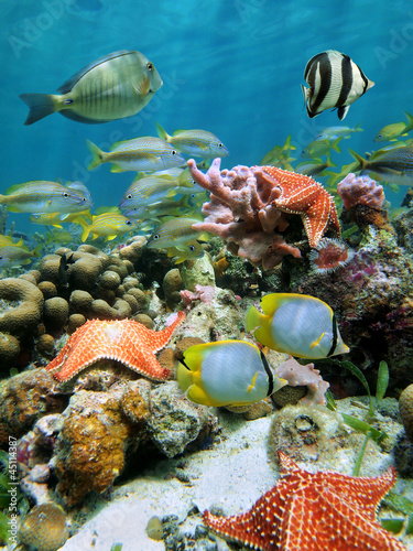 Papiers peints Recifs coralliens Red cushion starfish in a coral reef