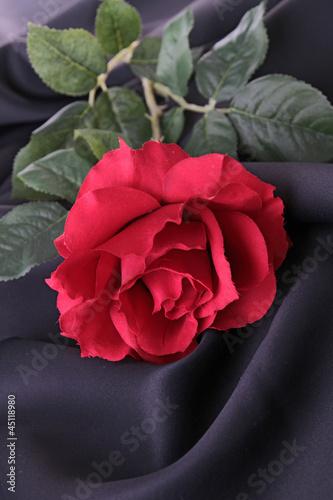 red rose on silk drape