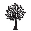 black oak tree, stylized, vector for design