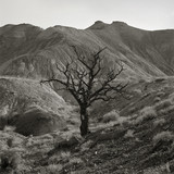 """USA, Utah, Torrey, Mountains with bare tree in foreground"""