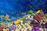 Koral i ryby w Morzu Czerwonym.Egypt