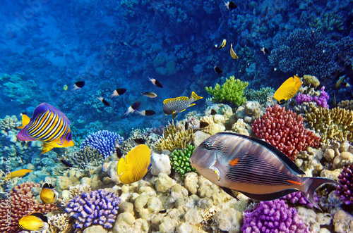 In de dag Egypte Coral and fish in the Red Sea.Egypt