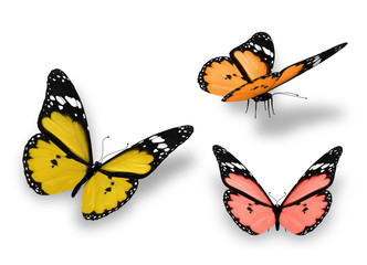 Three yellow orange butterflies, isolated on white