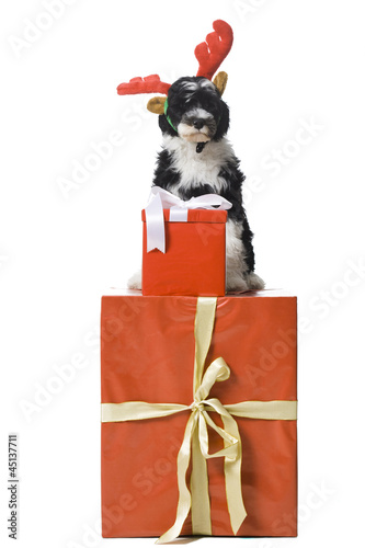 Puppy with reindeer horns sitting on gift box