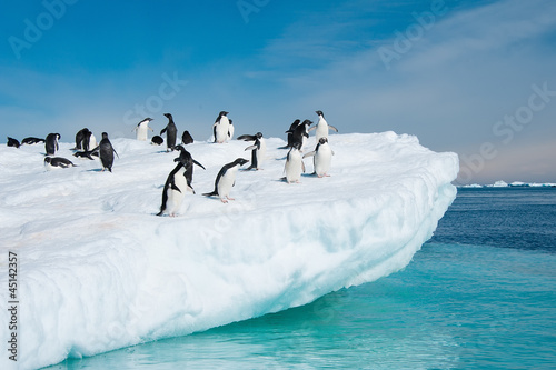 Foto op Canvas Poolcirkel Adelie penguins jumping from iceberg