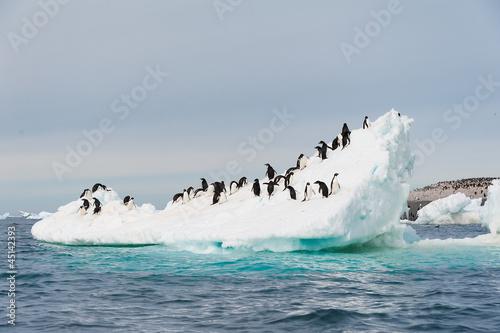 Aluminium Antarctica Adelie penguins jumping from iceberg