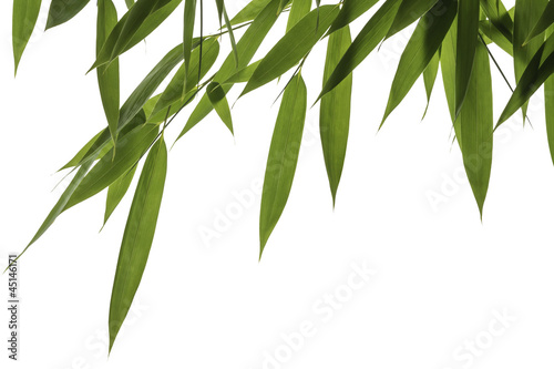 Bamboo leaves and stalks isolated on white background © jiravan