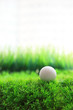 golf ball and green grass field