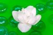 White Jasmine Flower Floating on Water