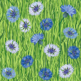 cornflower seamless floral pattern. meadow flowers on grass