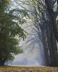 Misty autumn park