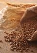 Zboże, mąka i kłosy