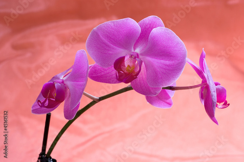 Fototapeten,orchidee,orchidee,blume,floral