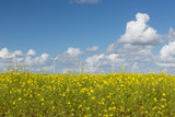 Dutch windturbines behind a yellow coleseed field