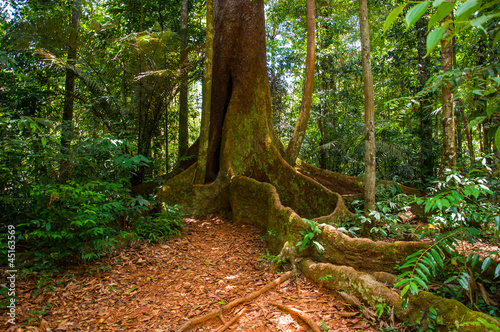 Tree in French Guiana