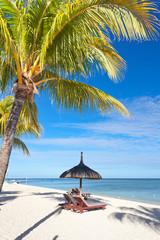 vacances paradisiaques sous les cocotiers