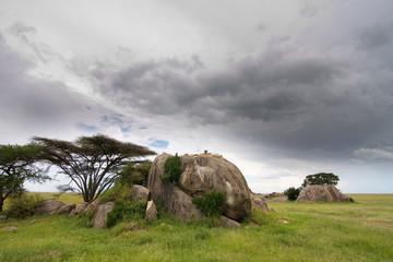 Serengeti Kopjes