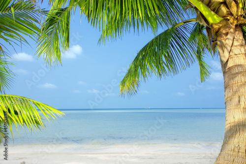 tropic scene