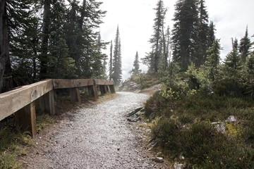 Lonely pathway on the foggy summit of Mount Revelstoke, Canada