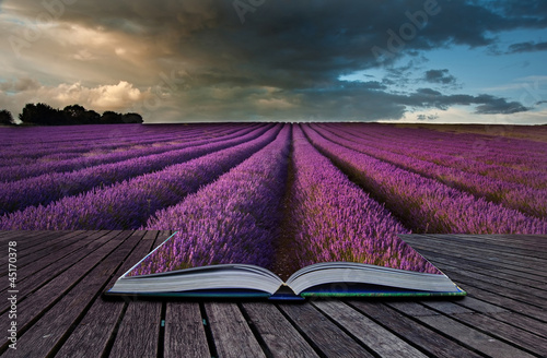 Creative concept image of lavender  landscape in pages of book - 45170378