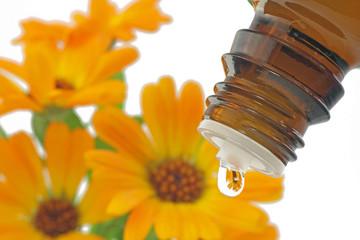 tropfen mit ringelblume (calendula)