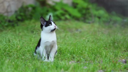 Kitten sitting on Green Grass