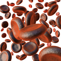 Red blood cells on white background