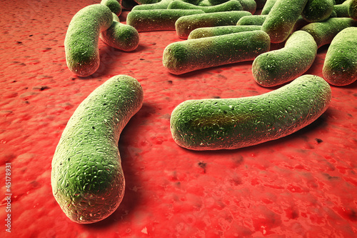 bacteria,virus