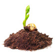 New life concept. Young seedling growing in a soil.