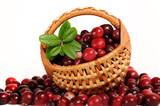 red cranberries with punnet