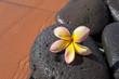 Fleur de Monoï