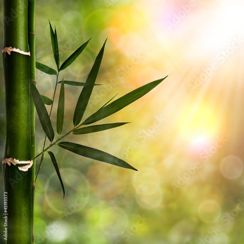 Papiers peints Bamboo Abstract natural backgrounds with bamboo foliage