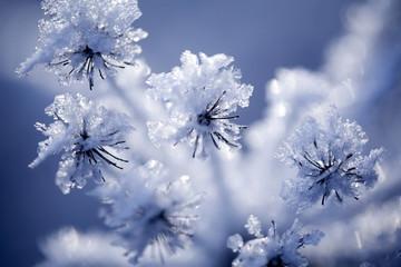 Detail of frozen flower