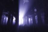 Supernatural scene in dark deep forest 3D render poster