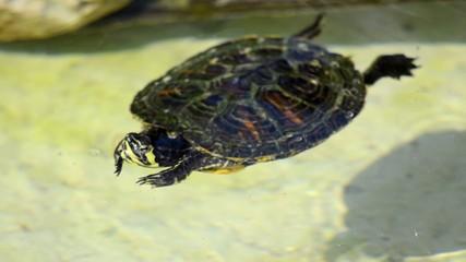 nice turtle