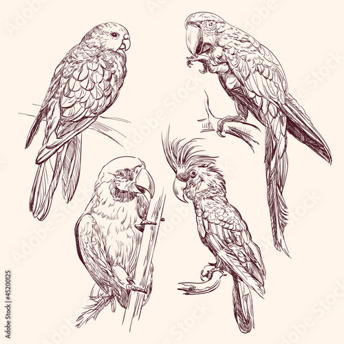 Parrot  collection   vector llustration