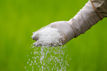 Chemical fertilizer pouring with farmer hand